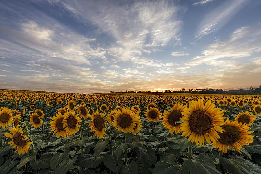 America Photograph - Field Of Gold by Scott Bean