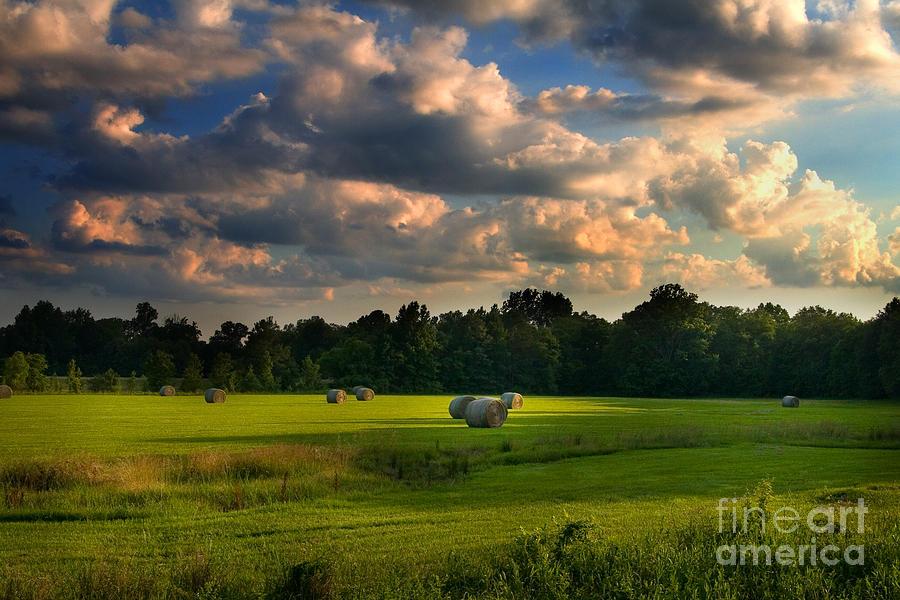 Field of Grace by T Lowry Wilson