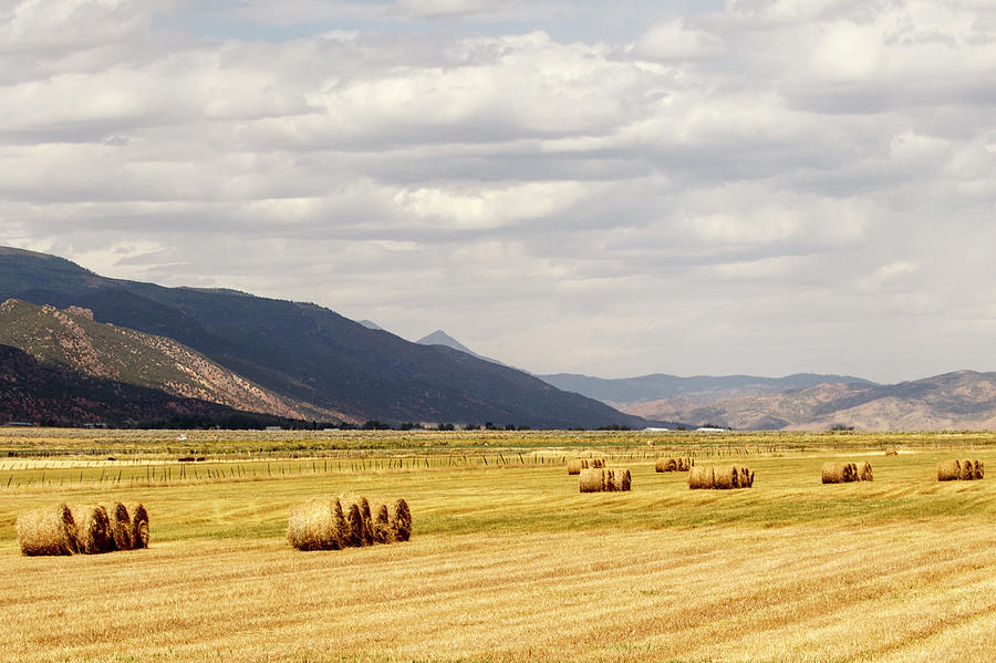 Country Life Photograph - Field of Hay Bales by K Bradley Washburn