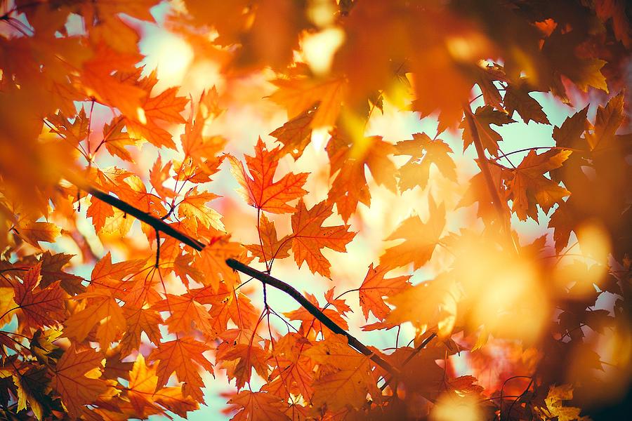 Autumn Photograph - Field of Orange by Todd Klassy