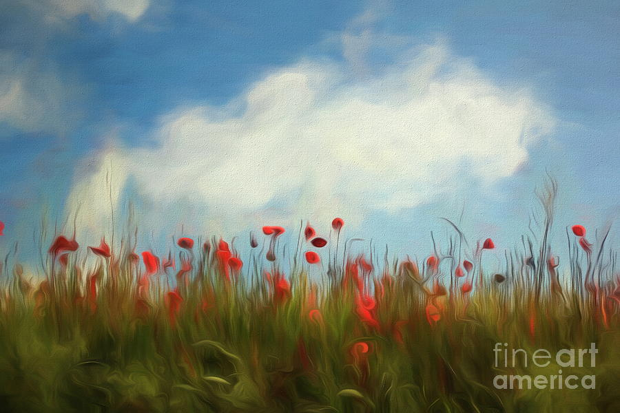 Field of poppies by Dominique Guillaume