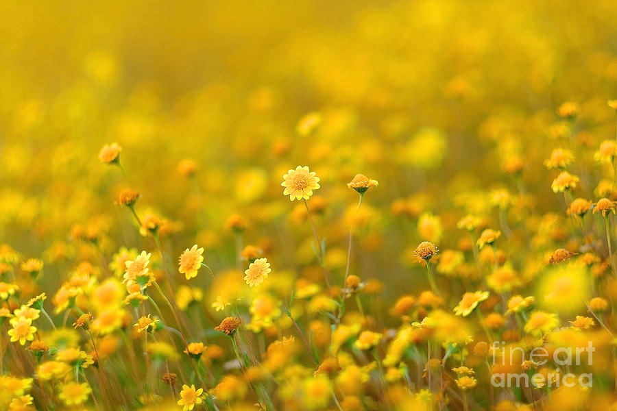 Fields of Gold by Parrish Todd