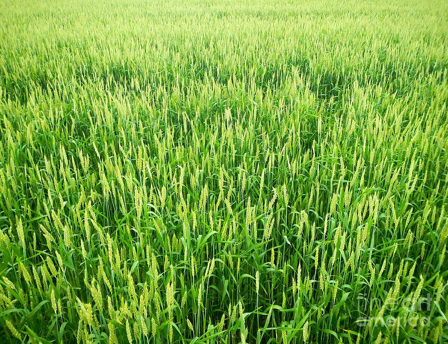 Fields of Green by Glenn Gordon