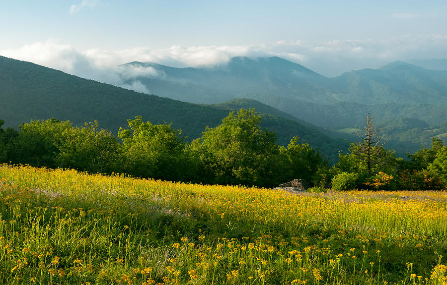 Fields of yellow, Roan Mountain State Park by Tommy  White