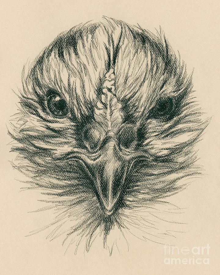 Hen Drawing - Fierce Hen by MM Anderson