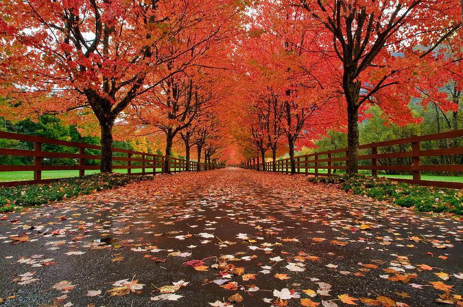 Fall Photograph - Fiery by Dan Mihai
