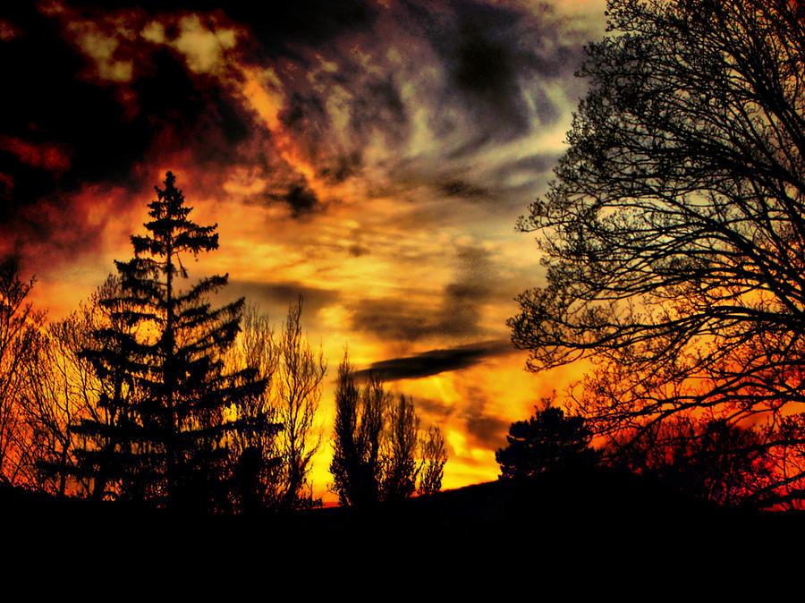 Fiery Forest Sunset Photograph