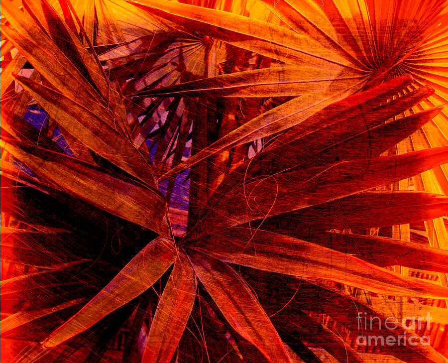 Palm Tree Photograph - Fiery Palm by Susanne Van Hulst