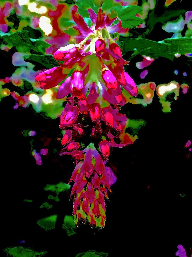 Fiery Pink Flowering Currant Photograph By Scott L Holtslander