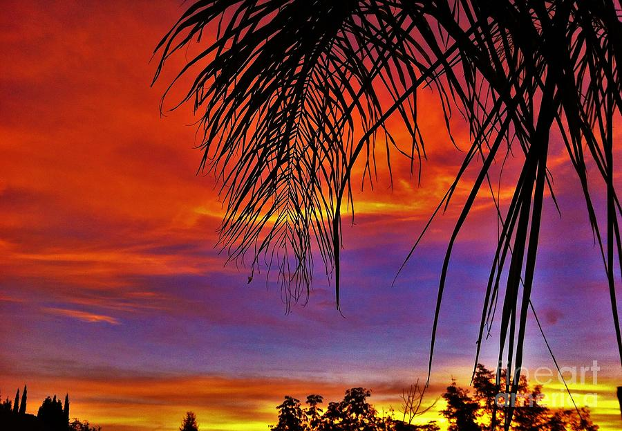 Nature Photograph - Fiery Sunset With Palm Tree by Flo DiBona