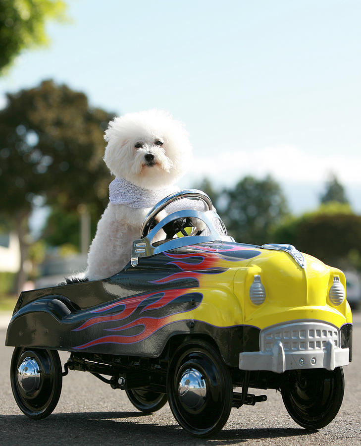 Alternative Energy Photograph - Fifi Goes For A Car Ride by Michael Ledray