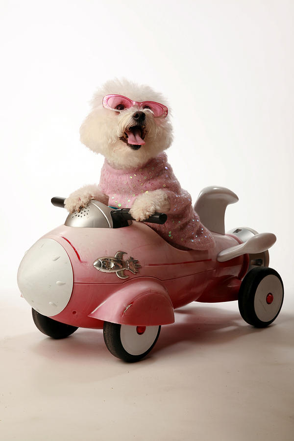 Akc Photograph - Fifi Is Ready For Take Off In Her Rocket Car by Michael Ledray
