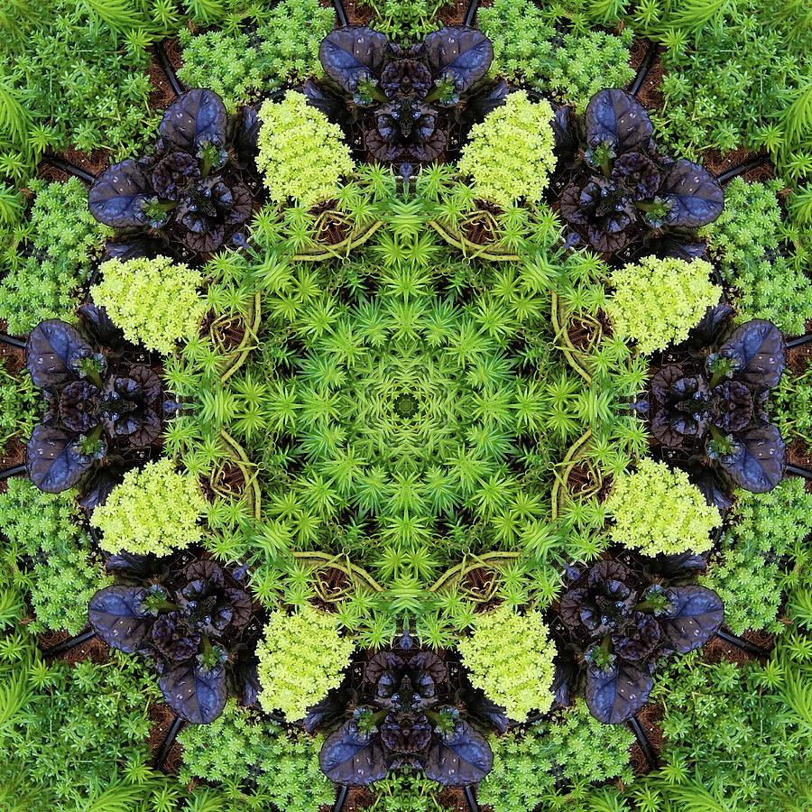 Garden Kaleidoscope At Olbrich >> Filigree Foliage Kaleidoscope Digital Art By R V James
