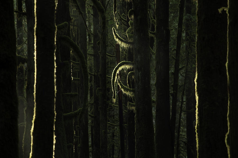 Final Light In Woods Photograph by Adam Gibbs
