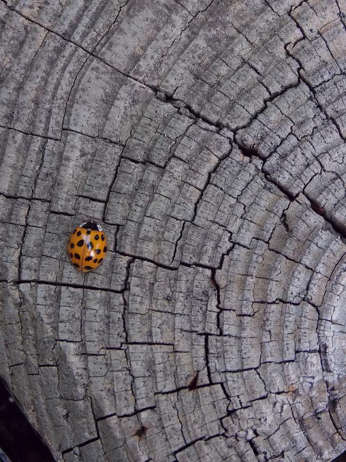 Ladybug Photograph - Find A Warm Spot by Guy Ricketts