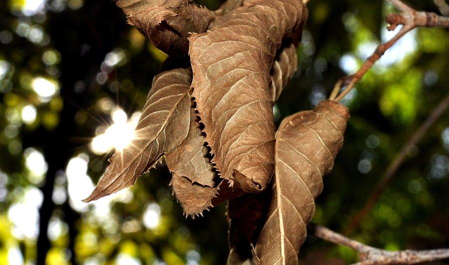Fall Photograph - Finding Fall by Luke Cain