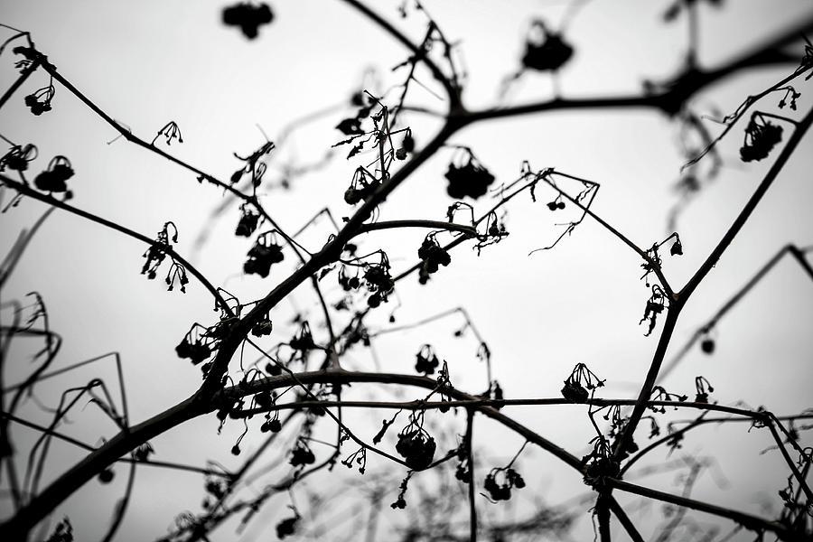 Cloudy Photograph - Fineart-nature-4 by Preben Stentoft