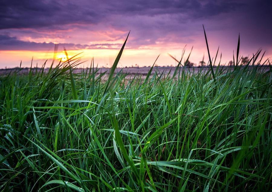 Sunset Photograph - Finn Line Grass by Cale Best