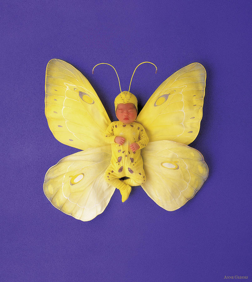 Baby Photograph - Fiona Butterfly by Anne Geddes