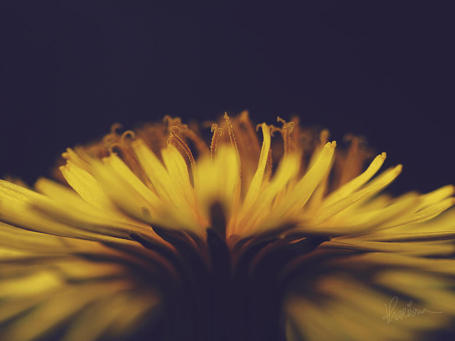 Yellow Photograph - Fire Dance by Kharisma Sommers