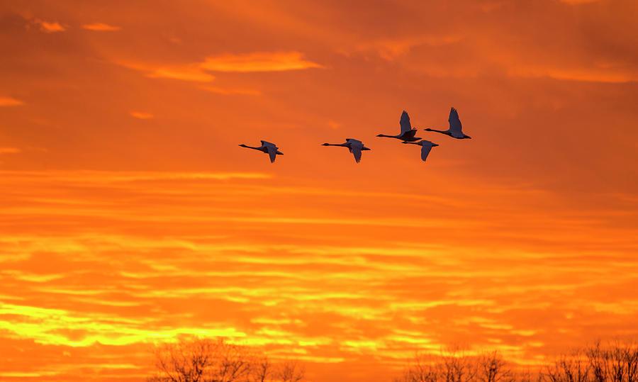 Fire Flight by Eilish Palmer