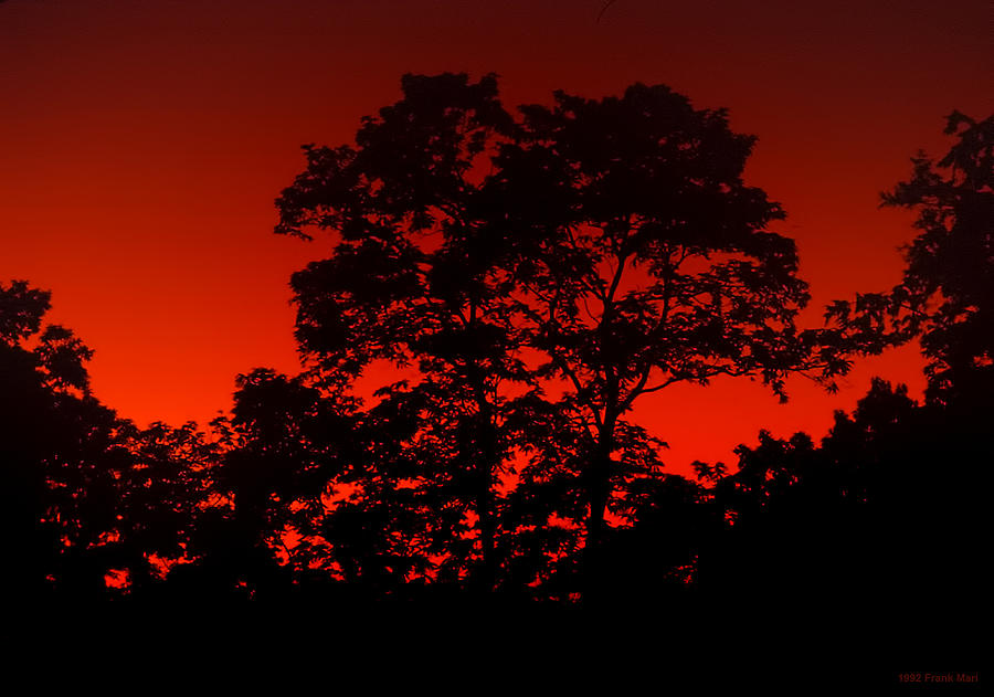 Trees Photograph - Fire In The Sky by Frank Mari