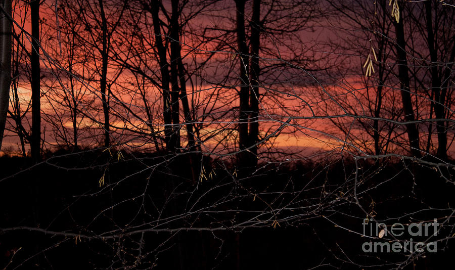 Y Photograph - Fire In The Sky by Robert Sander