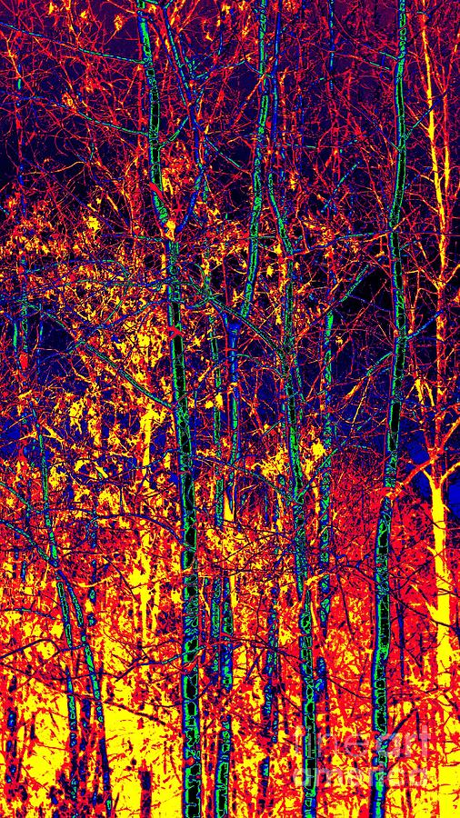 Trees Photograph - Fire In The Trees by Becky Kurth