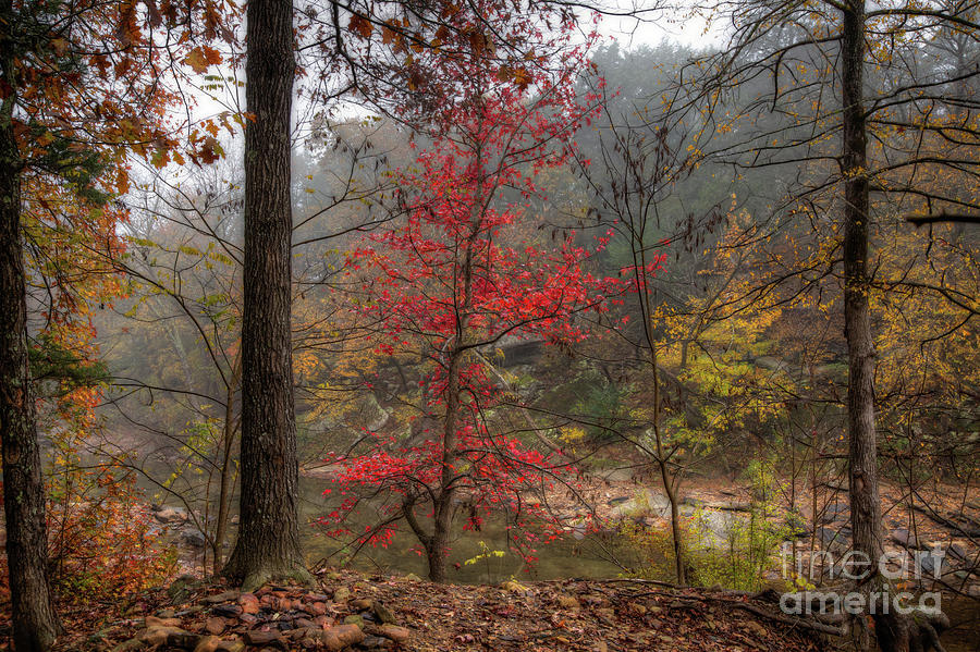 Fire on the Backroads by Larry McMahon
