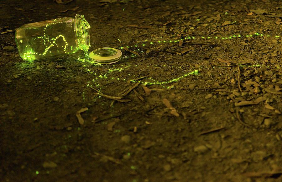 Fireflies Photograph - Fireflies #1 by Sander Hunter