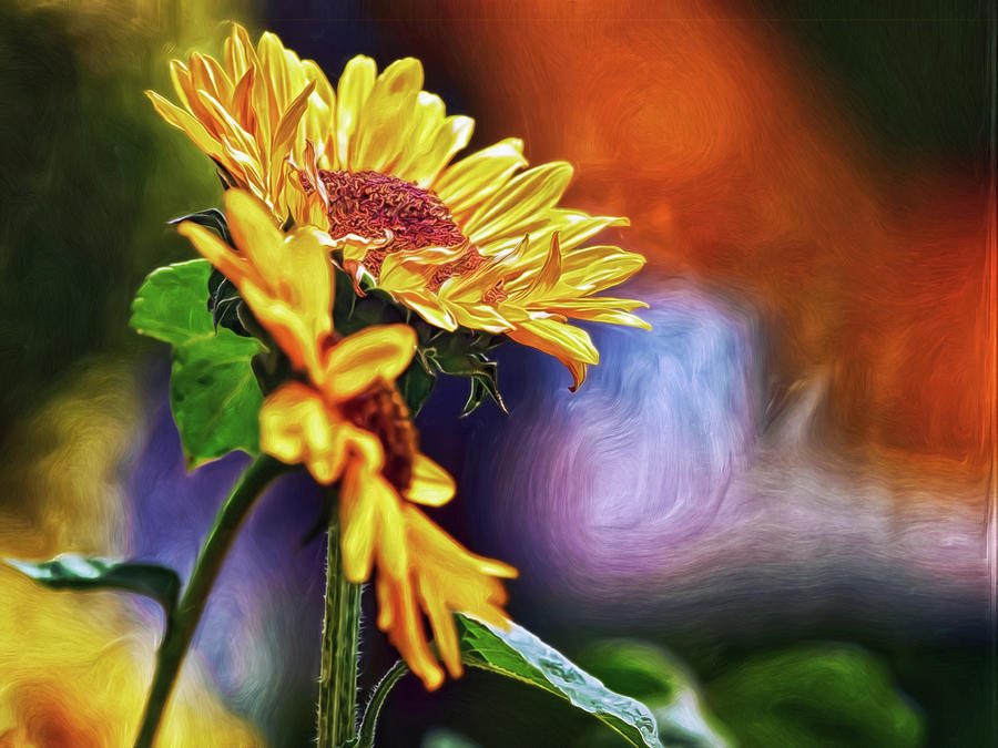 Firelit Sunflowers by Doctor MEHTA