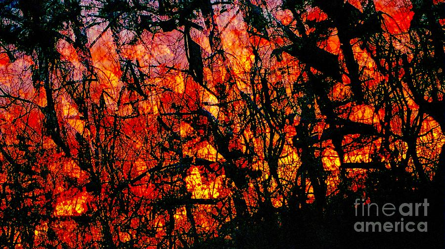 Fireskytreedance Photograph