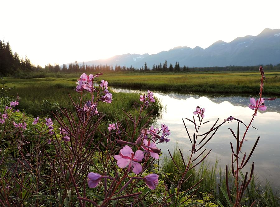 Fireweed Photograph - Fireweed At Robe Lake by Denise   Hoff