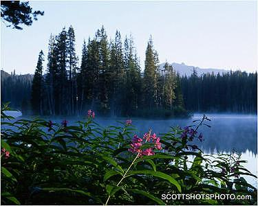 Fireweed Photograph - Fireweed At Serene Lakes by Scott Thompson