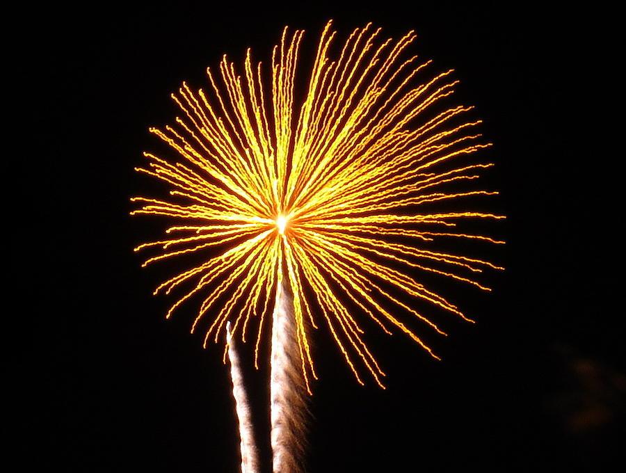 Firework Yellow Daisy Photograph By Adrienne Wilson
