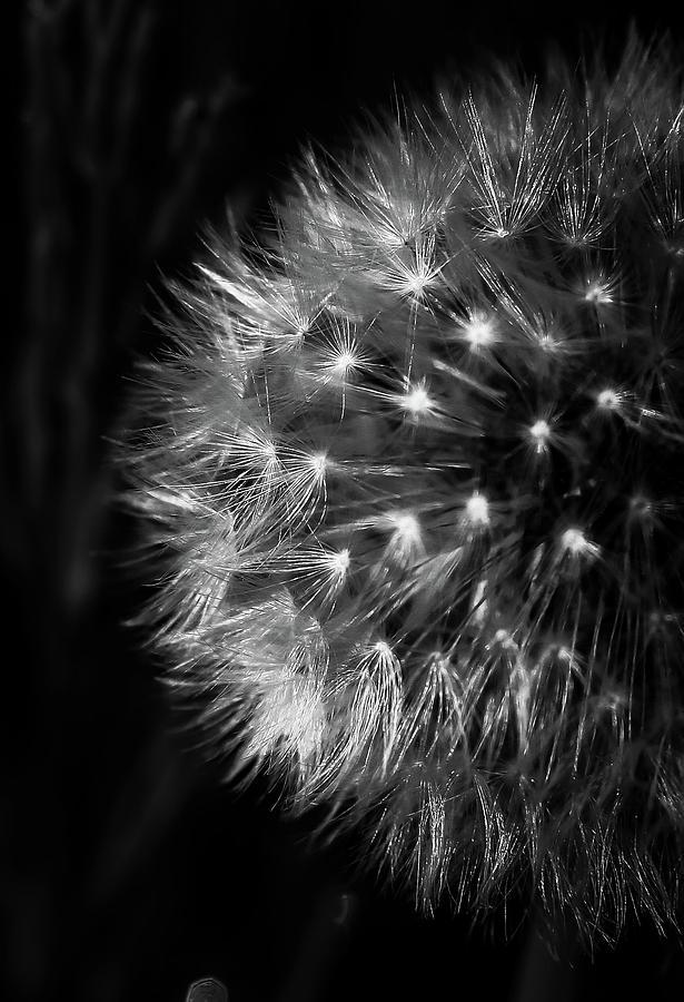 Macro Photograph - Fireworks by Dejan Milic