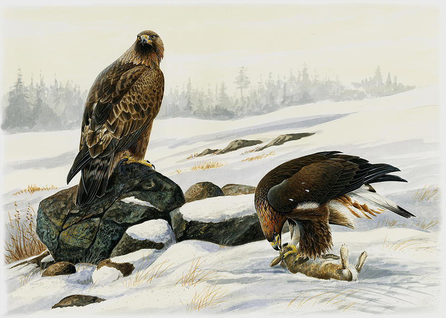 Golden Eagle Painting - First Catch by Dag Peterson