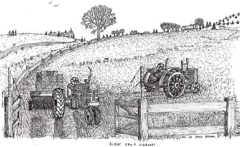 First Hay Crop Drawing by Jack G  Brauer