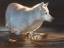Grey Wolf Painting - First Light - Grey Wolf by Karen Latham