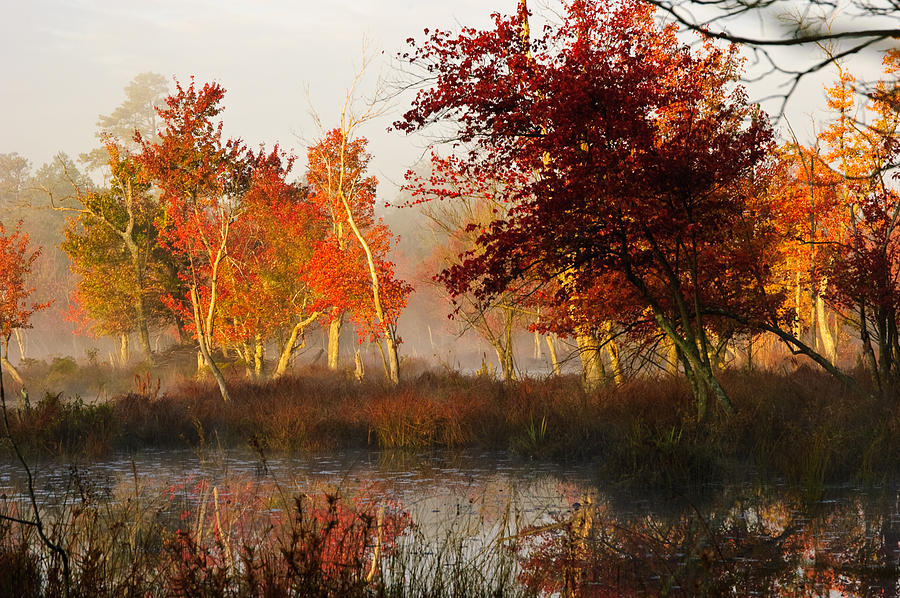 Landscape Photograph - First Light At The Pine Barrens by Louis Dallara