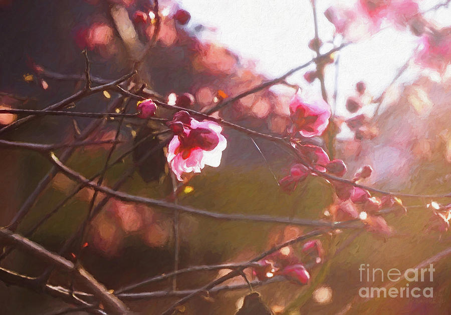 First light of spring by Helen White