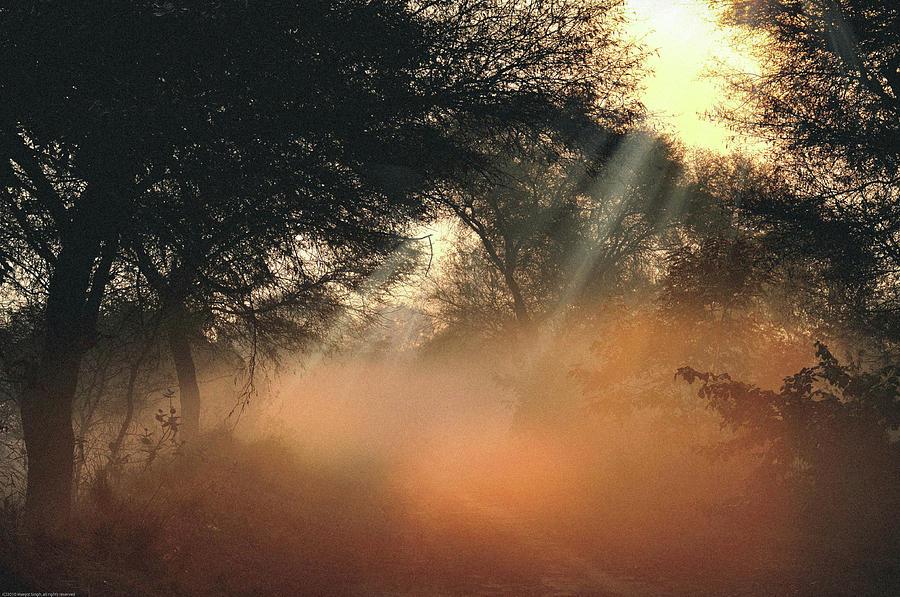 Light Photograph - First Rays  by Manjot Singh Sachdeva