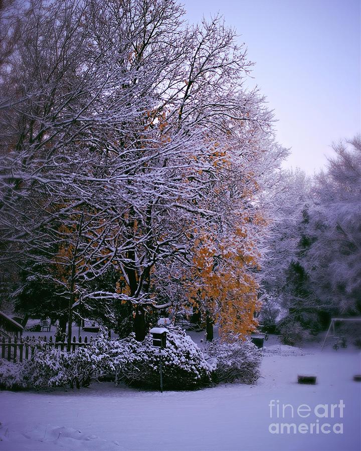 First Snow After Autumn Photograph