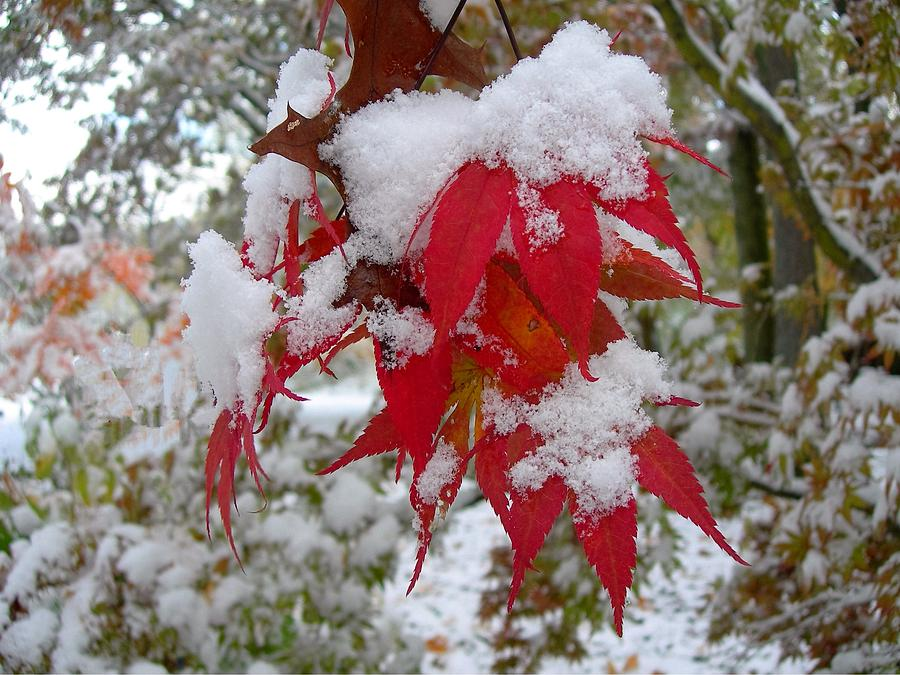 Snow Photograph - First Snow by Beth Tidd