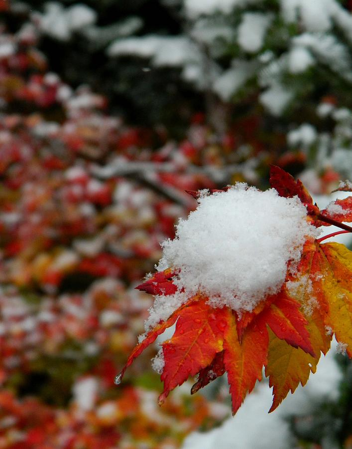 First Snow Photograph by Shannon West
