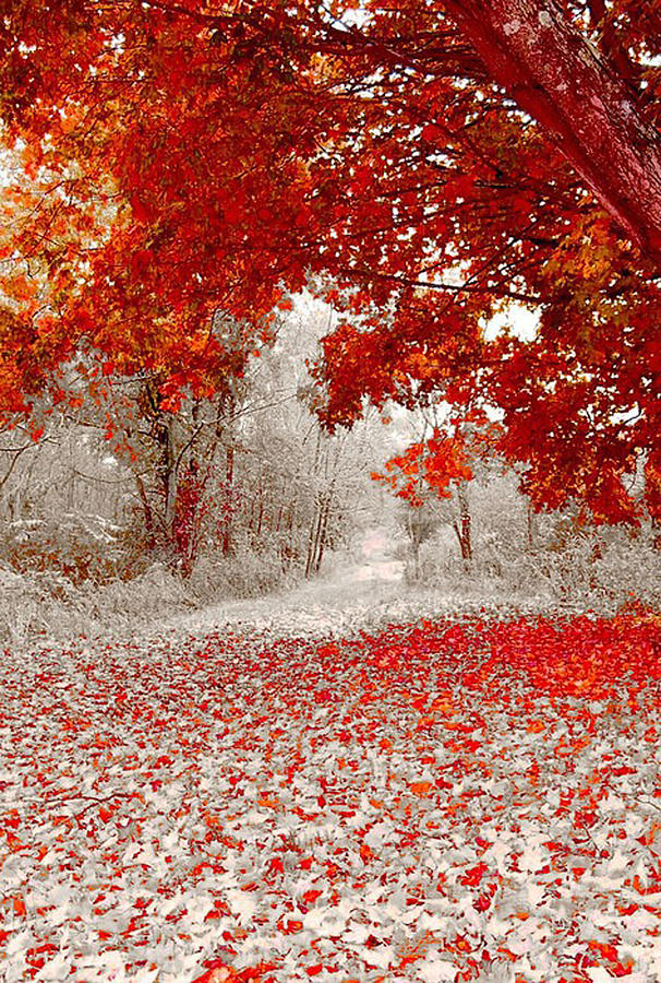 Red Photograph - First Snowfall In Duluth by Helen Stapleton