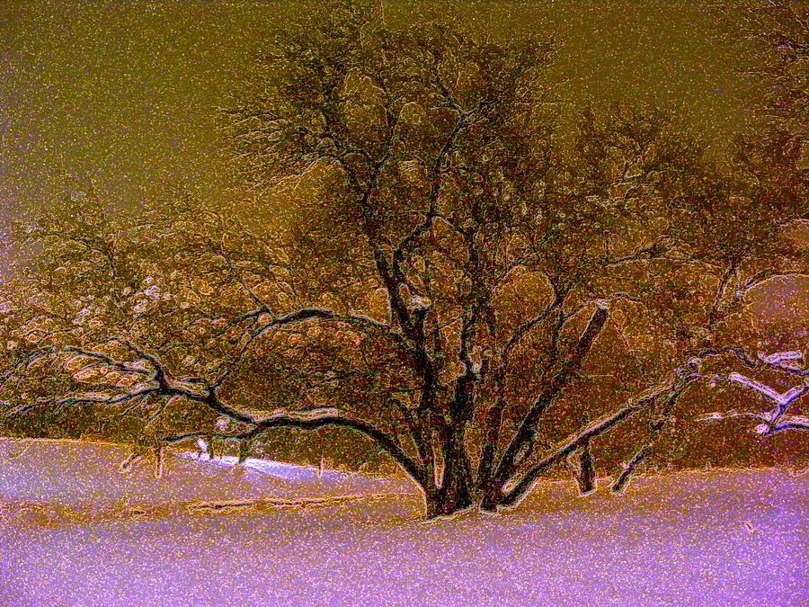 First Snowfall Photograph - First Snowfall by Sherwanda Irvin