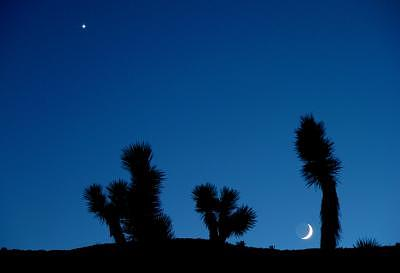 Desert Photograph - First Star by Sindi June Short
