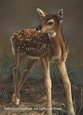 Fawn Painting - First Steps - Fawn by Rebecca Latham