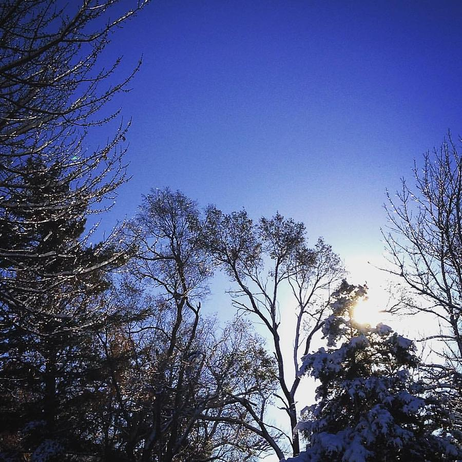 Trees Photograph - First Thaw After The First Snow by Frank J Casella